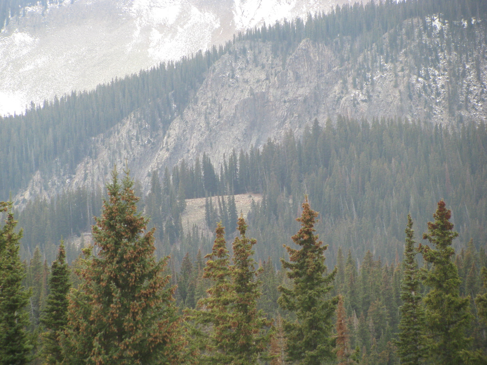 View of \'the knoll\' from Swampy Pass